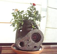 ラピュタ鉢.jpg