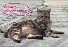 江ノ島猫1.jpg