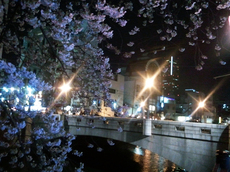 2012大岡川花見.jpg