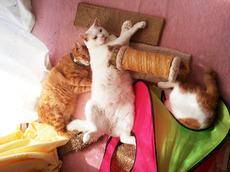猫まんだら.jpg