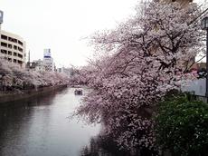 2013-03-26大岡川.jpg