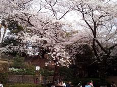 2013-03-26野毛山動物園.jpg