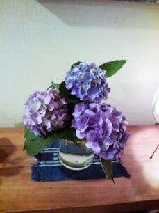 家の紫陽花.jpg