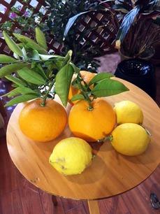 夏みかんとレモン.jpg